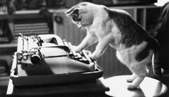 cat-typewriter