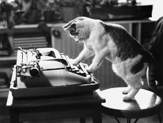 cat-typewriter